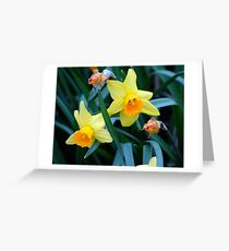 Fortune Daffodils Greeting Card