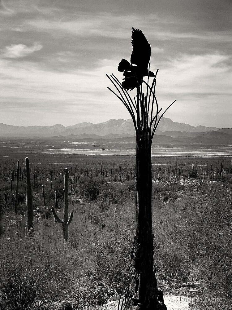 Raptor on Saguaro ~ Black & White by Lucinda Walter