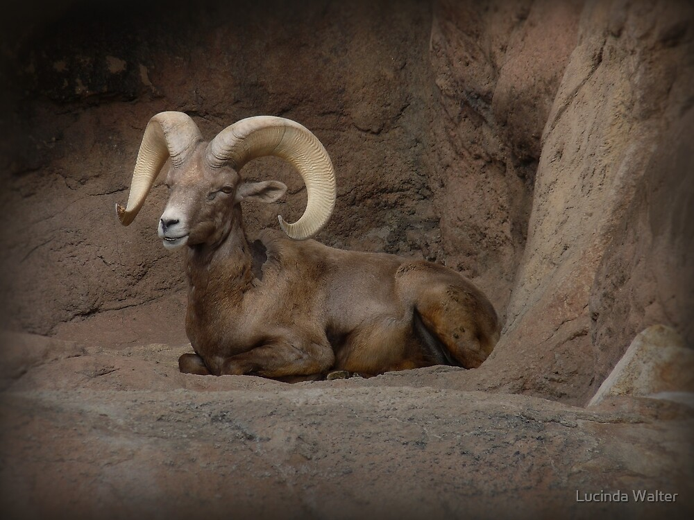 Majestic Big Horn by Lucinda Walter