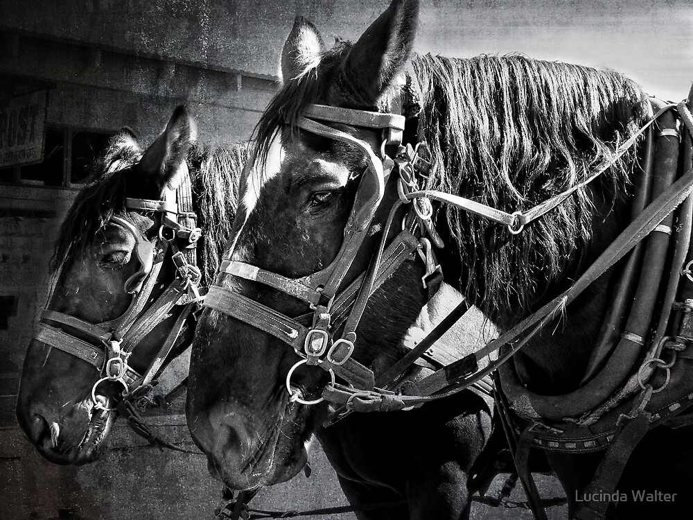Working Horses by Lucinda Walter
