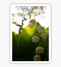 Convallaria Majalis - Lily Of The Valley Flower Filled With Sunrise | Melville, New York Sticker