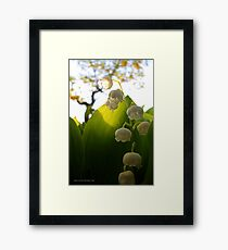 Convallaria Majalis - Lily Of The Valley Flower Filled With Sunrise | Melville, New York Framed Print