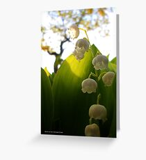 Convallaria Majalis - Lily Of The Valley Flower Filled With Sunrise | Melville, New York Greeting Card
