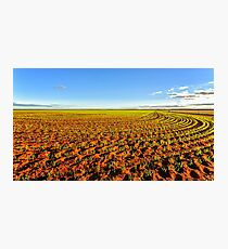 Green Fields Photographic Print