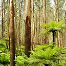 Tree ferns and trees by NaturalCultural