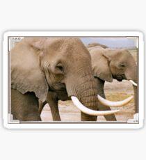 Amboseli Tusker Sticker