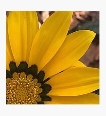 Summer Gazania - Macro  Photographic Print