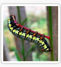 Caterpillar's Lunch - Macro Sticker