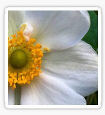 Blonde Anemone - Macro Sticker