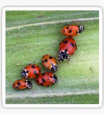 Ladybirds on Corn - Macro Sticker