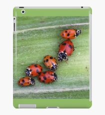 Ladybirds on Corn - Macro iPad Case/Skin