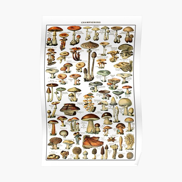 VINTAGE FRENCH MUSHROOM CHART POSTER COLLECTORS exotic Mushrooms Herbs Flowers