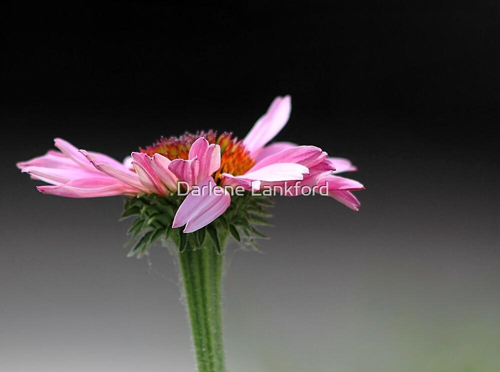 Nature's Ballerina by Darlene Lankford Honeycutt