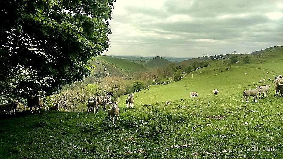 Dovedale lambs by Jacki  Clark
