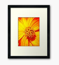 """Flowerburst"" - Unique Original Artist's Floral Photograph! Framed Print"