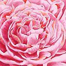 Pink Peony Flowers Closeup Illustration by artonwear