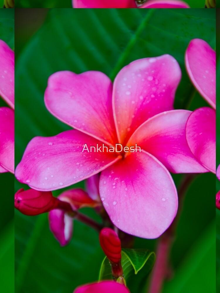 Pink Plumeria_1071 by AnkhaDesh