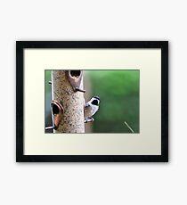 Bird Framed Print