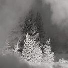 The winter dream by Alla Gill