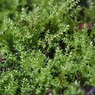 Moss on a small scale by norgan