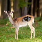 Eye Deer by Jeff Kingston