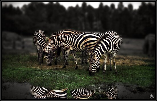 A Zeal of Zebras by Wayne King