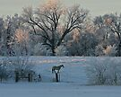 White Horse Winter by Ken McElroy
