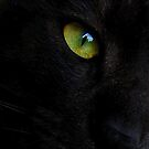 Eye see me by iamelmana