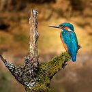Kingfisher on branch by Patricia Jacobs DPAGB LRPS BPE4