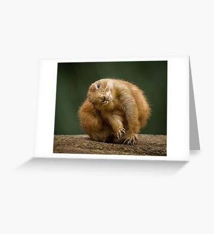 Prairie Dog Greeting Card