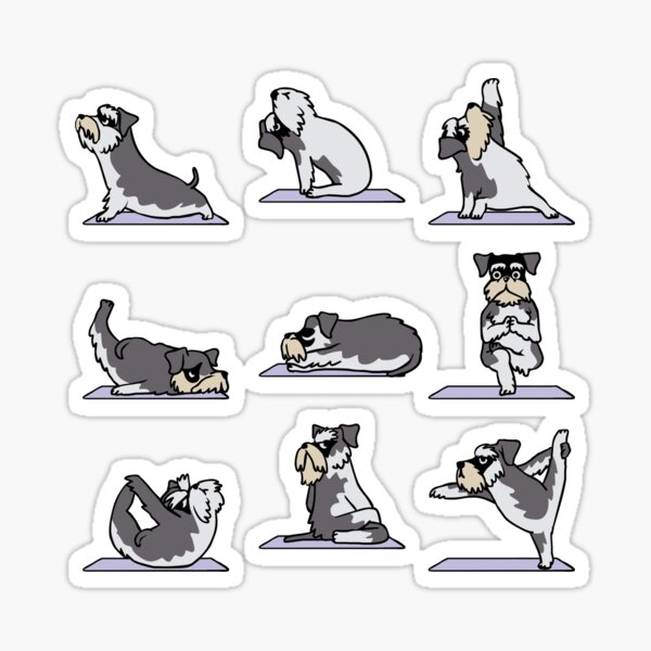 Schnauzer Miniatura Yoga Pegatina