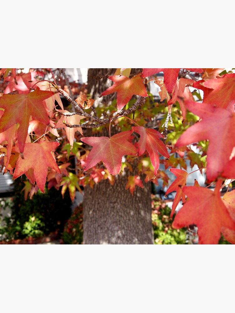 Red Leaves in Autumn by douglasewelch