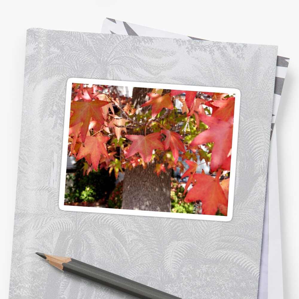 Red Leaves in Autumn Sticker