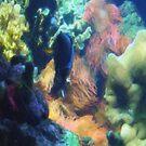 dream submarine by marcocreazioni
