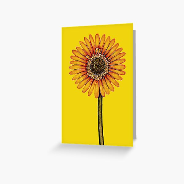 Yellow Gerbera Greeting Card
