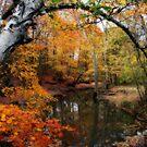 In Dreams Of Fall by kkphoto1
