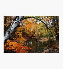 In Dreams Of Fall Photographic Print
