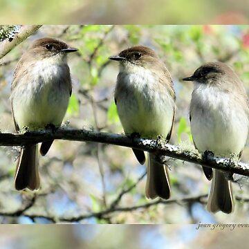 Little Brown Birds Of Spring by jgevans