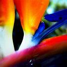 Bird of Paradise by Dana Roper