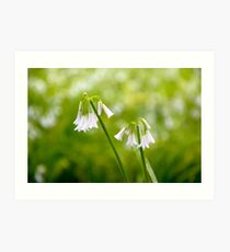 White petals on a spring day Art Print