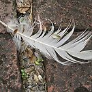 Forlorn Feather by Monnie Ryan
