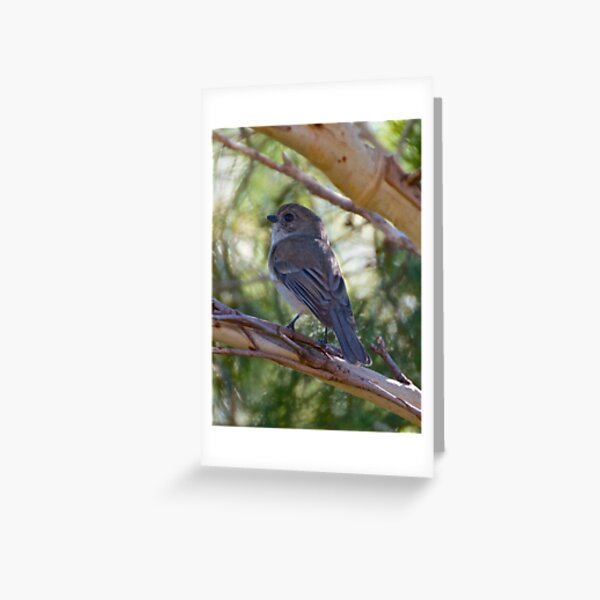 Golden Whistler by David Irwin Greeting Card