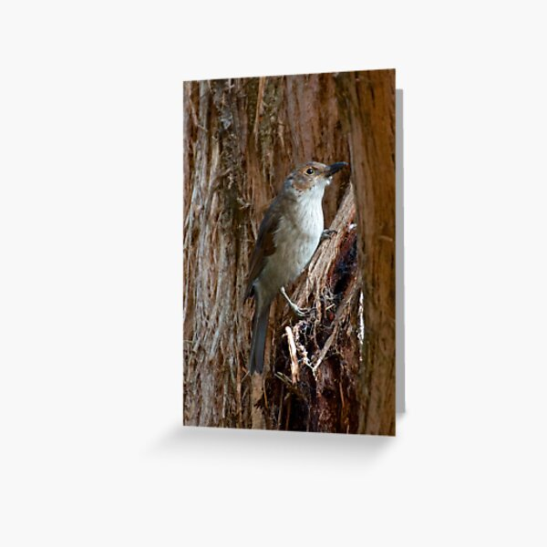 Grey Shrikethrush by David Irwin Greeting Card