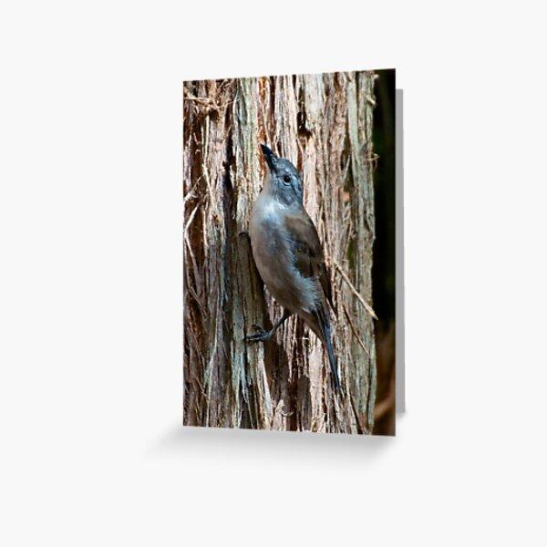 SHRIKETHRUSH ~ Grey Shrikethrush JFZHFC87 by David Irwin Greeting Card