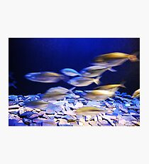 fishes in aqaurium Photographic Print