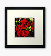 Red flowers, need I say more? Framed Print