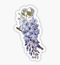 Vintage - Flower - Wisteria Sticker