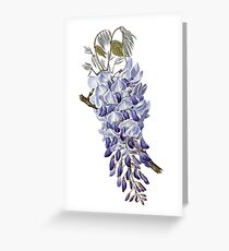 Vintage - Flower - Wisteria Greeting Card
