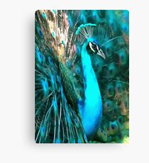 Peacock Plumage Canvas Print