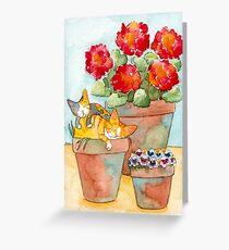 Sleeping Kittens and Geraniums Greeting Card